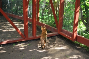 kattgårds invigning 002