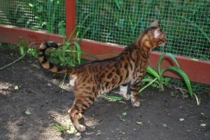 kattgårds invigning 005