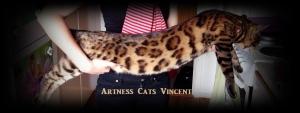 Vincent 2